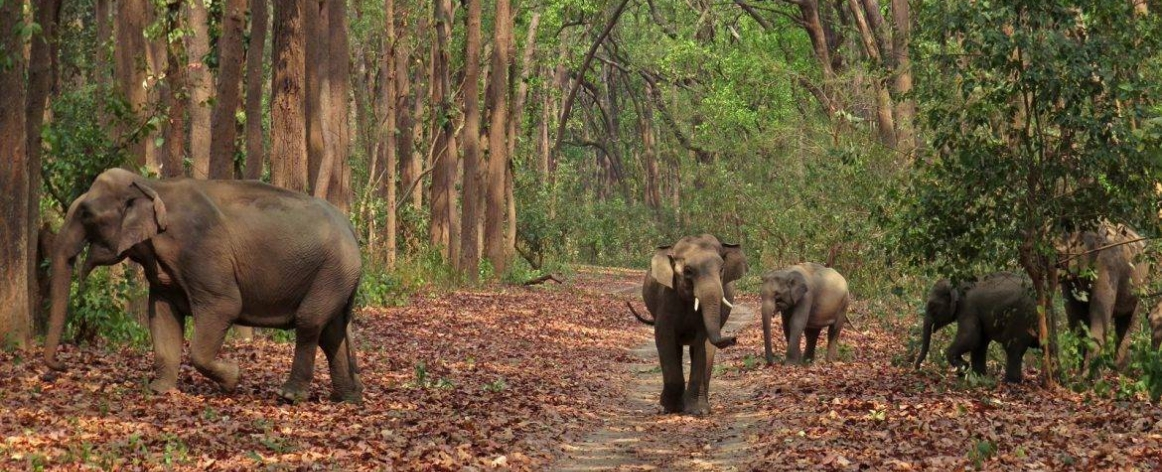 Jim Corbett Group Packages, Corporate Group Packages