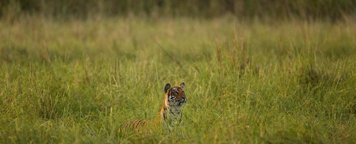 Send Inquiry for Corbett Big Cats Safari
