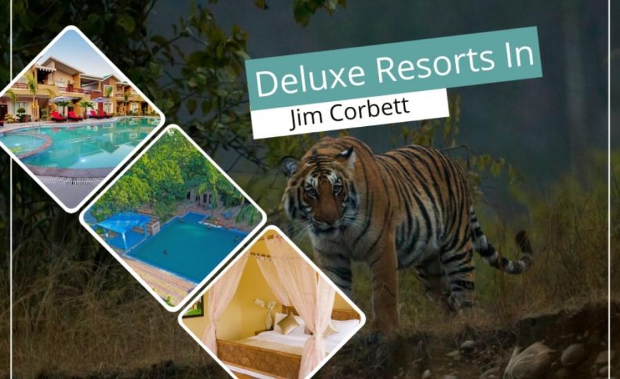 Deluxe Resort In Jim Corbett