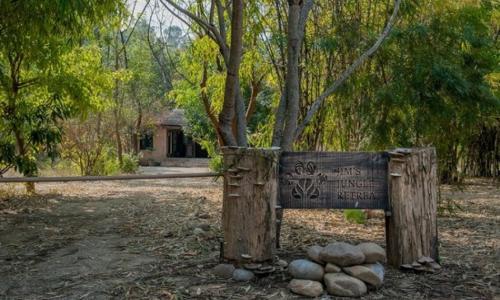 Jim's Jungle Retreat