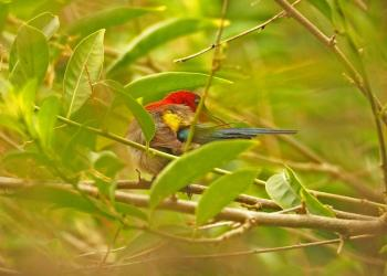 Jim Corbett Birding Tour